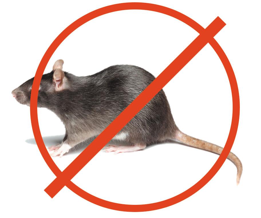 Какие приемы дератизаторов вы можете использовать на своем огороде, чтобы выследить мышей