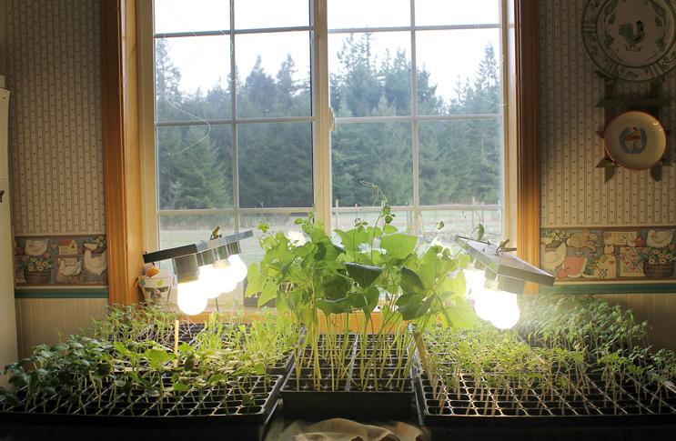 Когда рассаде не хватает света: очевидные признаки, которые упускают многие садоводы