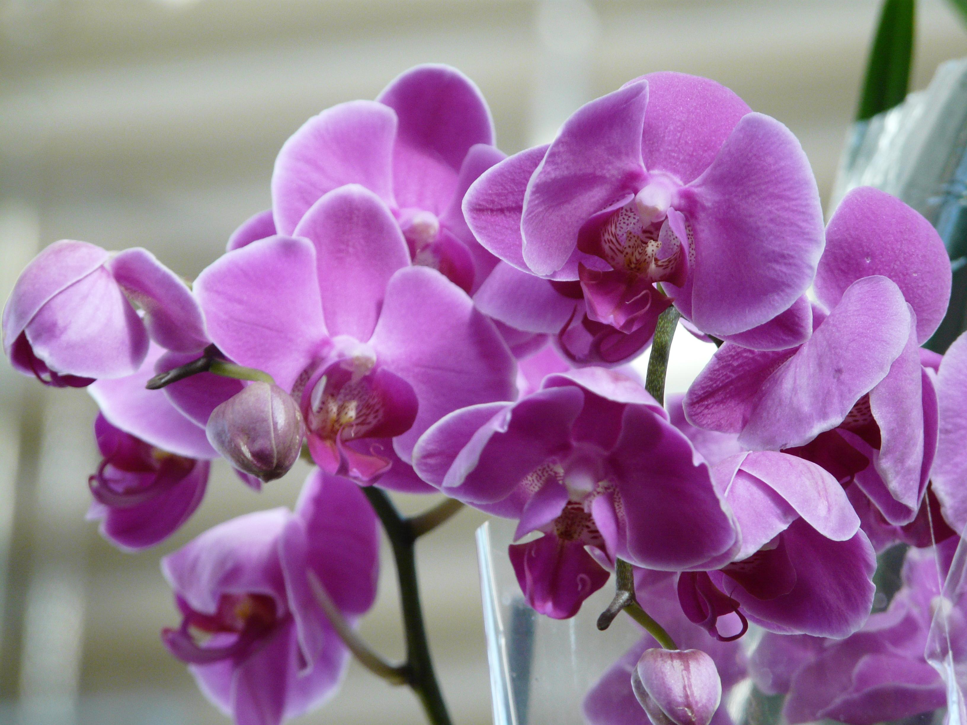 Распространенные проблемы при выращивании орхидеи