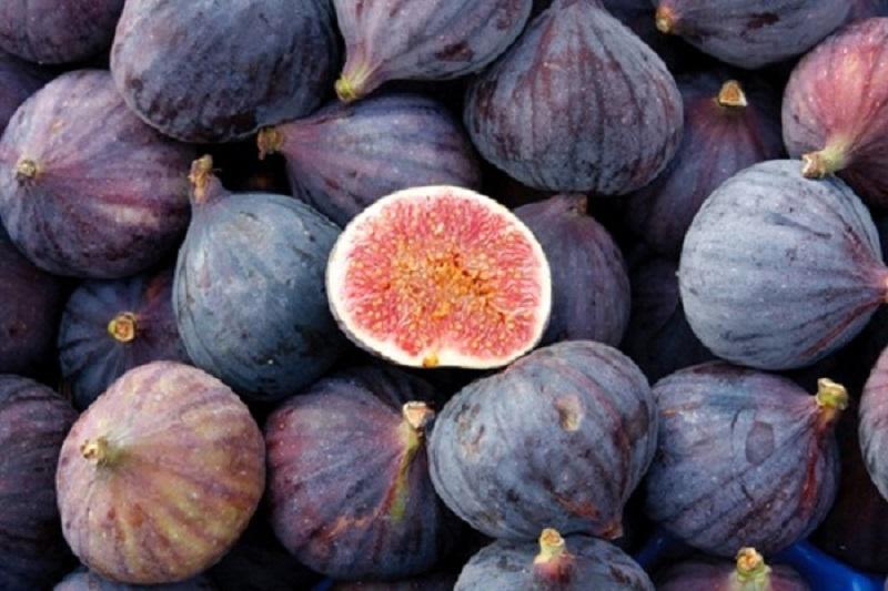 Инжир или «винная ягода»