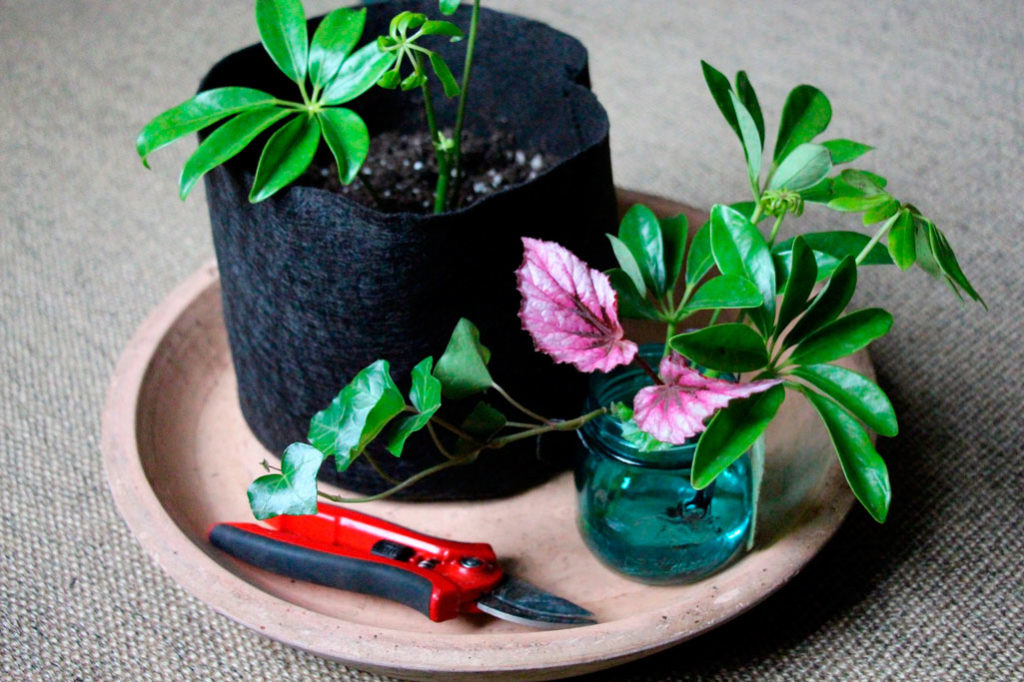 Виды размножения комнатных растений