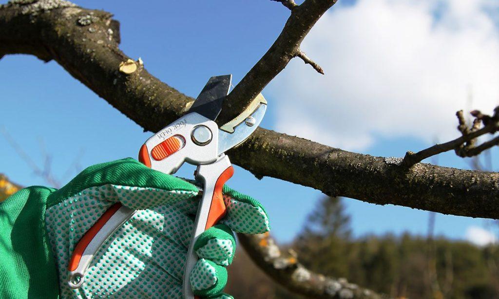 Осенняя обрезка яблонь: назначение, этапы и техника процедуры