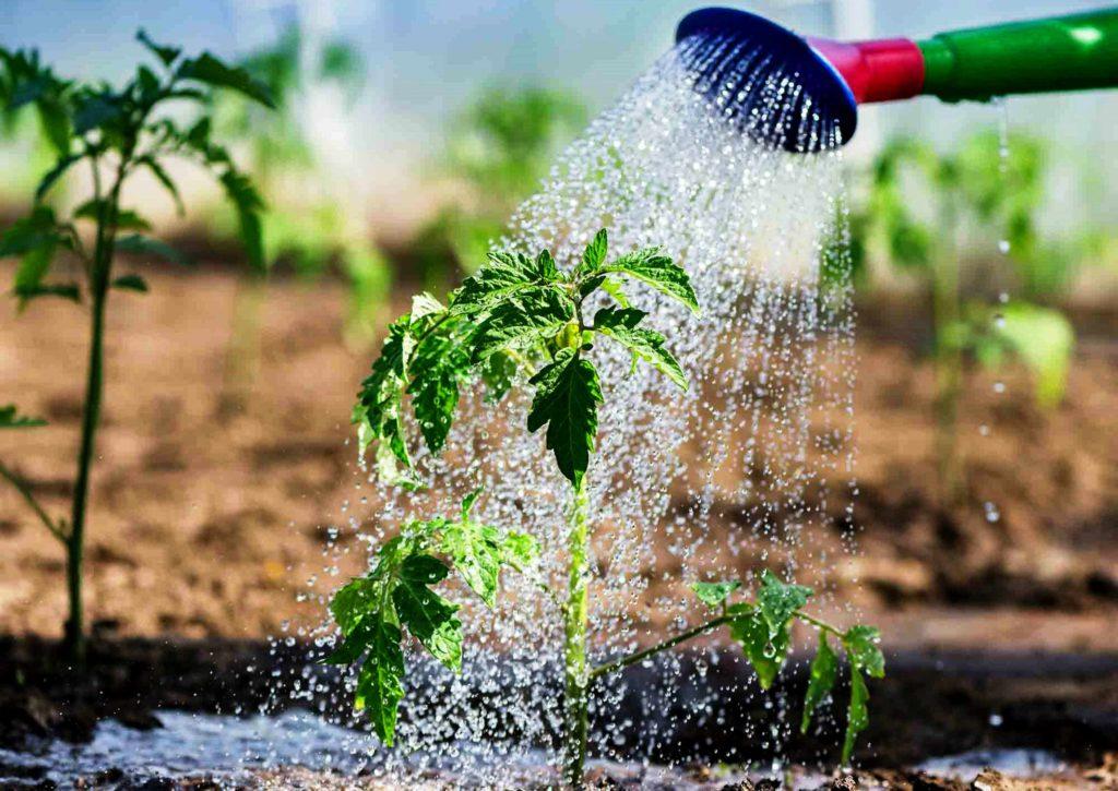 Где брать воду для полива при отключенном водоснабжении