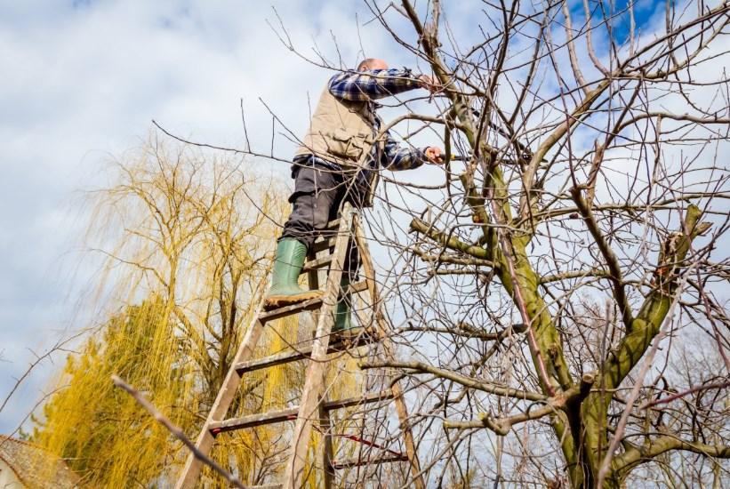 Обрезка деревьев осенью: для начинающих пошагово, когда делают обрезку веток и крон плодовых и кустарников, видео, как правильно, сучкорезами, секаторами, пилой
