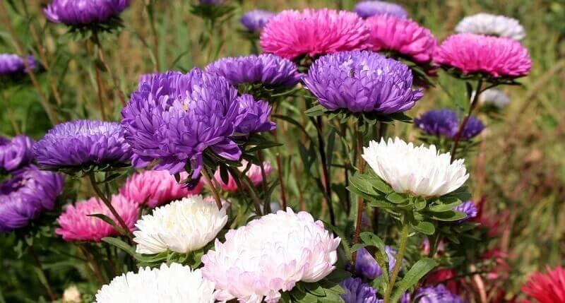 Какие бывают цветы: виды и названия