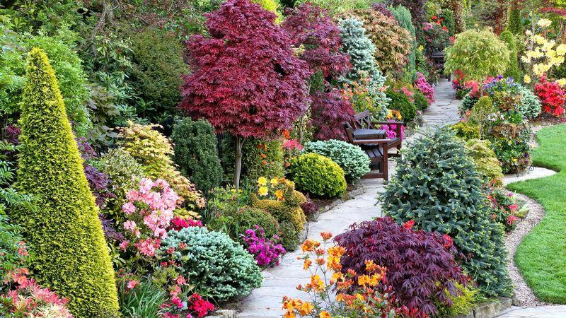 Как выбрать декоративные растения для сада