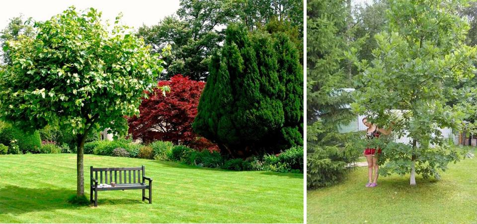 Породы лиственных деревьев для выращивания на участке
