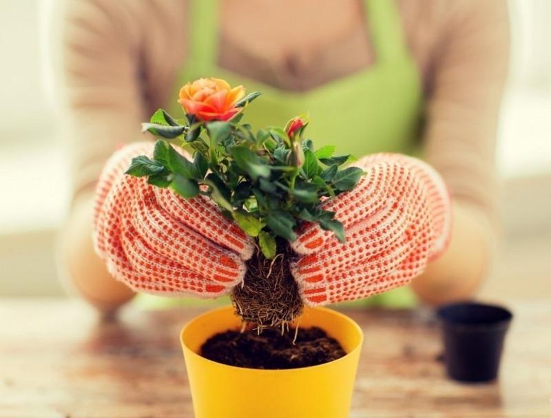 Когда лучше пересаживать цветы в июне 2019 года по лунному календарю