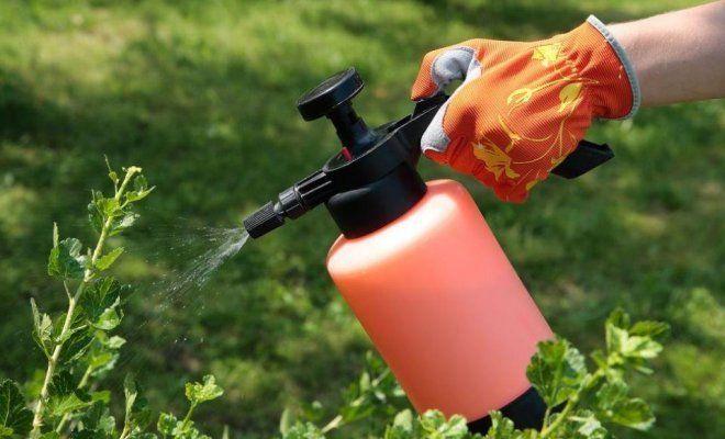 Применение инсектицидов от щитовки