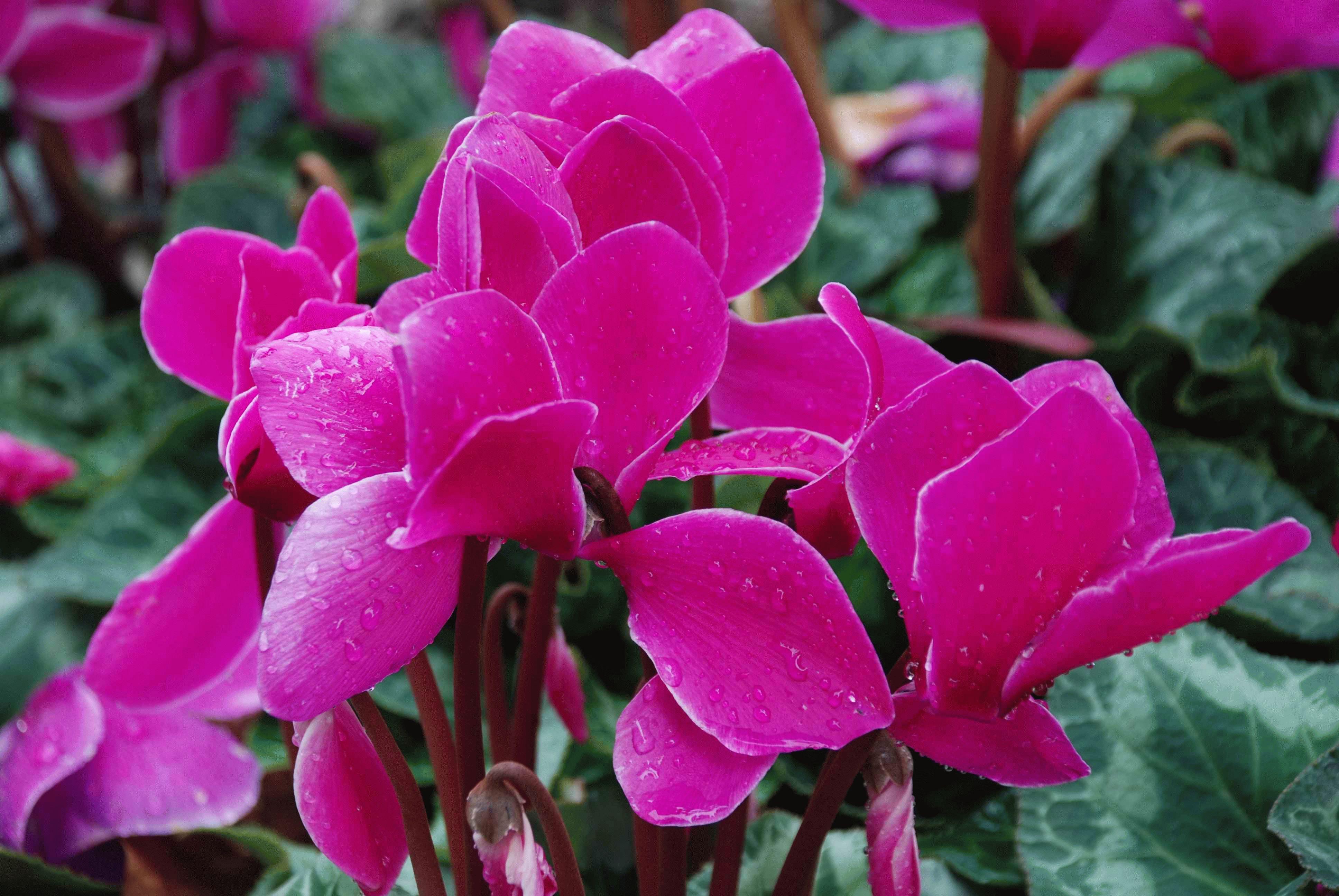 Какие цветы можно выращивать зимой дома в горшках зимой?