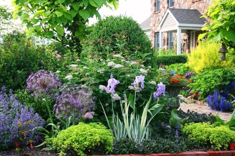 Многолетние и морозостойкие цветы для дачи в северных регионах