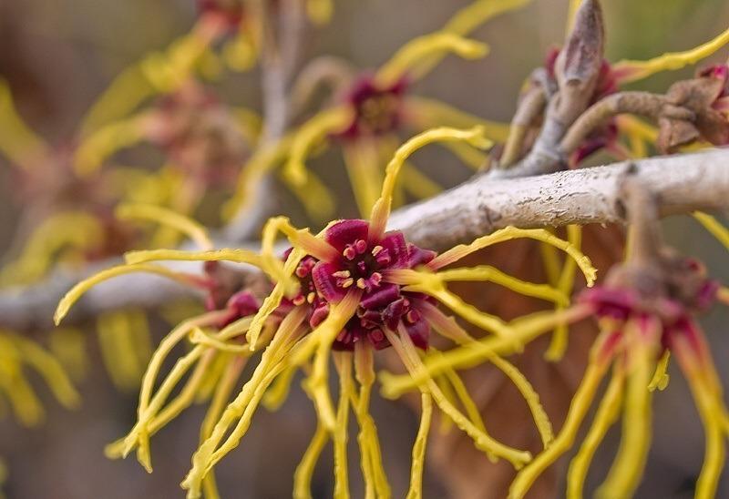 Растение складывает листья при прикосновении