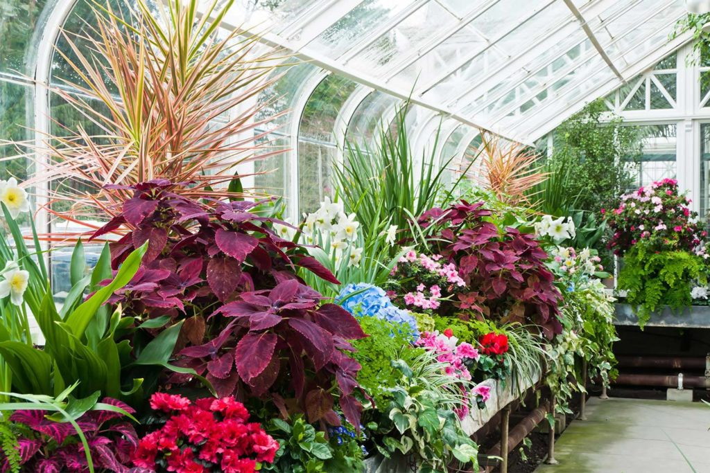 Бизнес по разведению декоративных растений